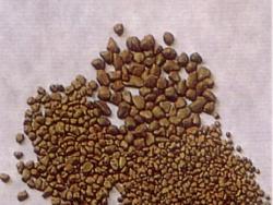 日本米粒石(UP石)